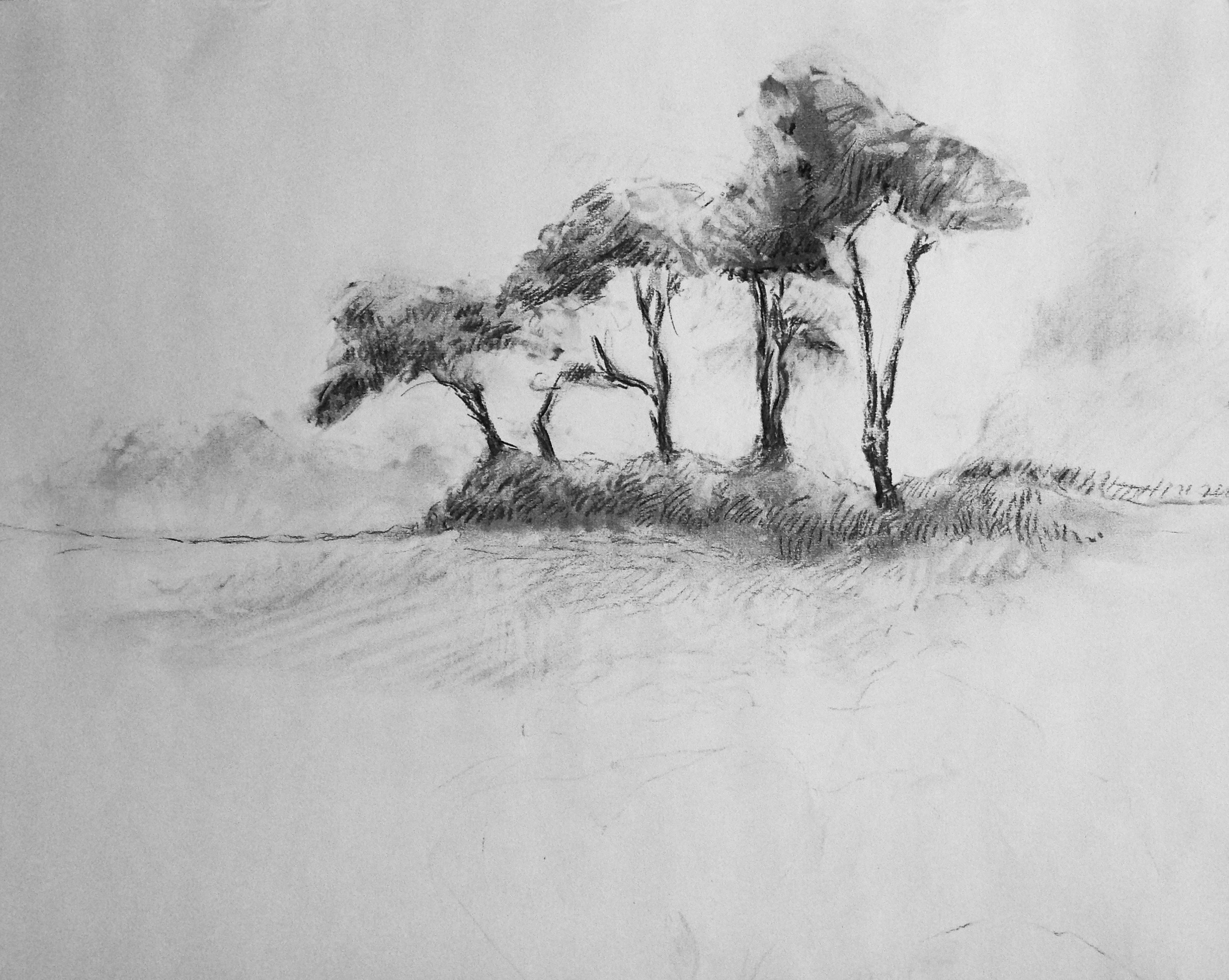 Les pins breton….